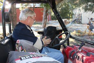 Doug feeding a young bull calf