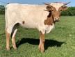 FHR Rowdy Cowgirl
