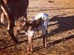 2021 WLR Jim's Deborah Bull Calf