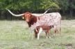 #2021 - Shy Iron x Cowboy Catchit Chex