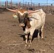 RJF Illini Cowboy