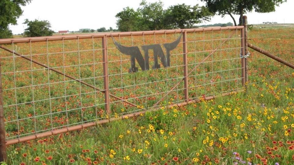 Double N Cattle - Breeder Of Registered Longhorns Muenster, TX